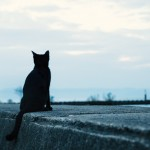 """【リーク】Air Jordan 6 """"Black Cat"""" 【12月31日発売予定】"""