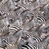 """【一部店舗判明】adidas Yeezy Boost 350 V2 """" Zebra """" CP9654【アディダス イージーブースト350V2ゼブラ】"""